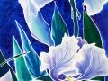 Northern-Iris